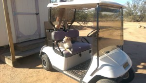 Even Maisy helps: she's the co-pilot of the golf cart as well as garden supervisor! And she never misses an event.